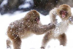 macachi-palle-neve