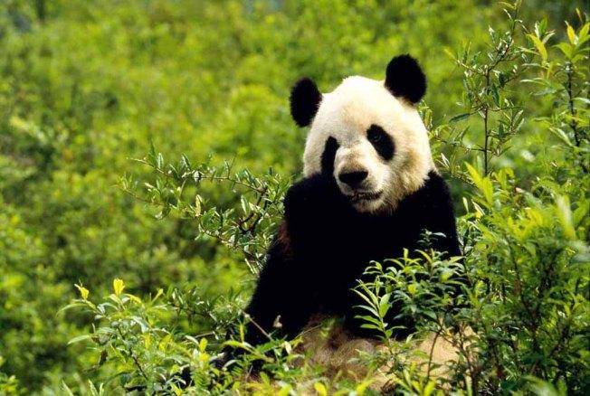 pandapicture-0