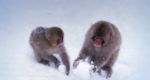 SnowMonkeys_EN-GB575382856