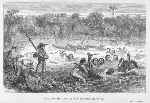 Bates, at left, holding a club watching Amazonian native Indians capturing terrapins and a cayman.  Wood engraving from Bates 'The Naturalist on the River Amazons,' 1863.