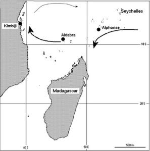 kimbiji-tortoise-map